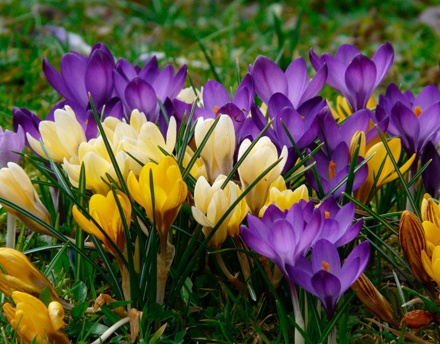 Самые красивые цветы в мире — d19de6f098c54cd8.png