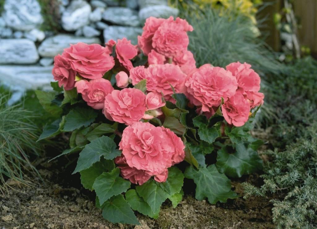 Самые красивые цветы в мире — 94d06cabd2a2bbe3.jpg