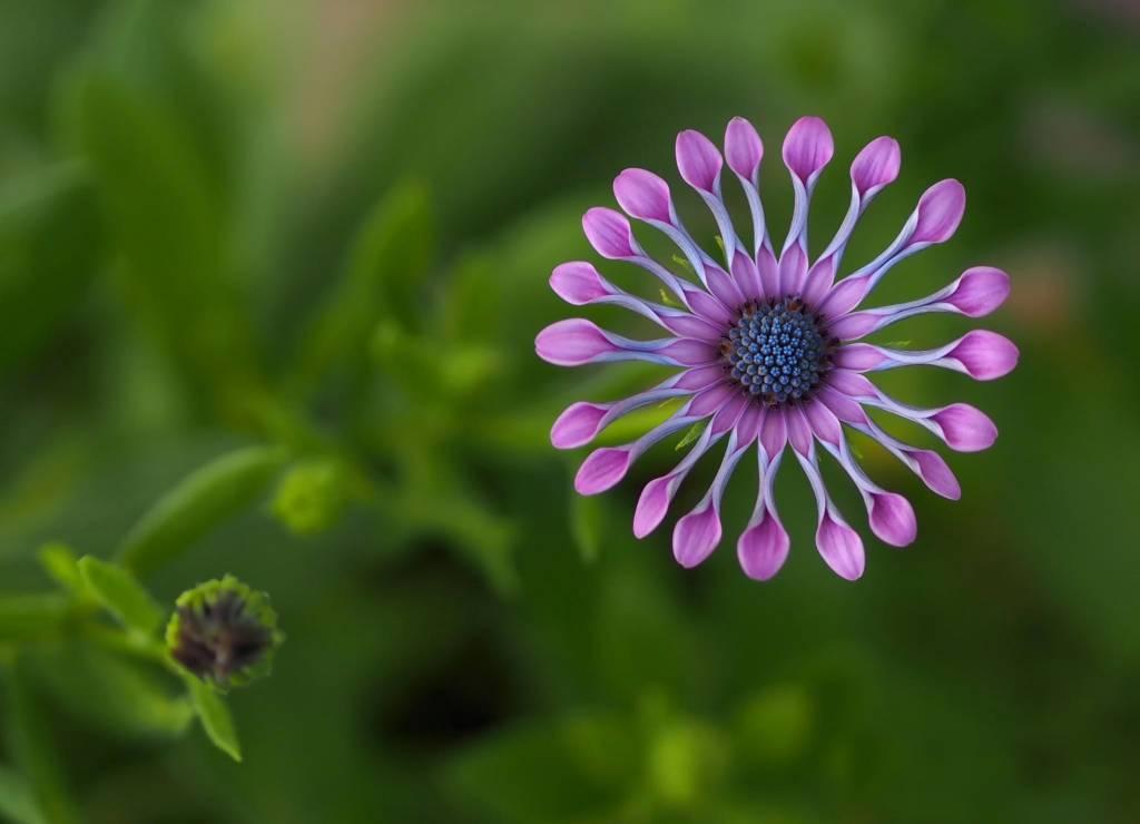 Самые красивые цветы в мире — 6b14f816a57aa215.jpg