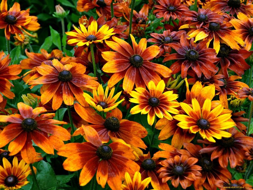 самые красивые цветы на земле фото