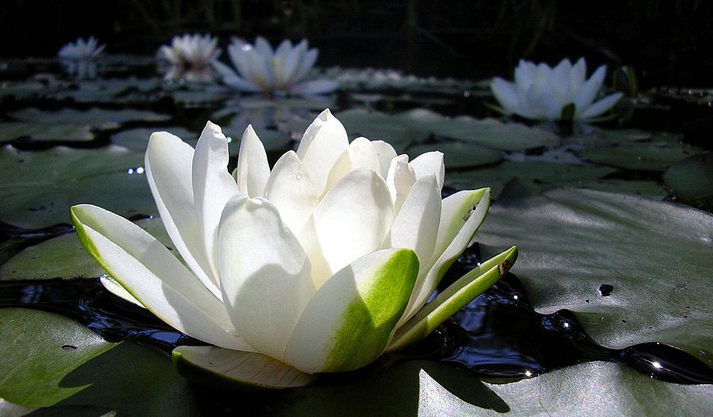 Самые красивые цветы в мире — fdd12c3e9bb20be9.png