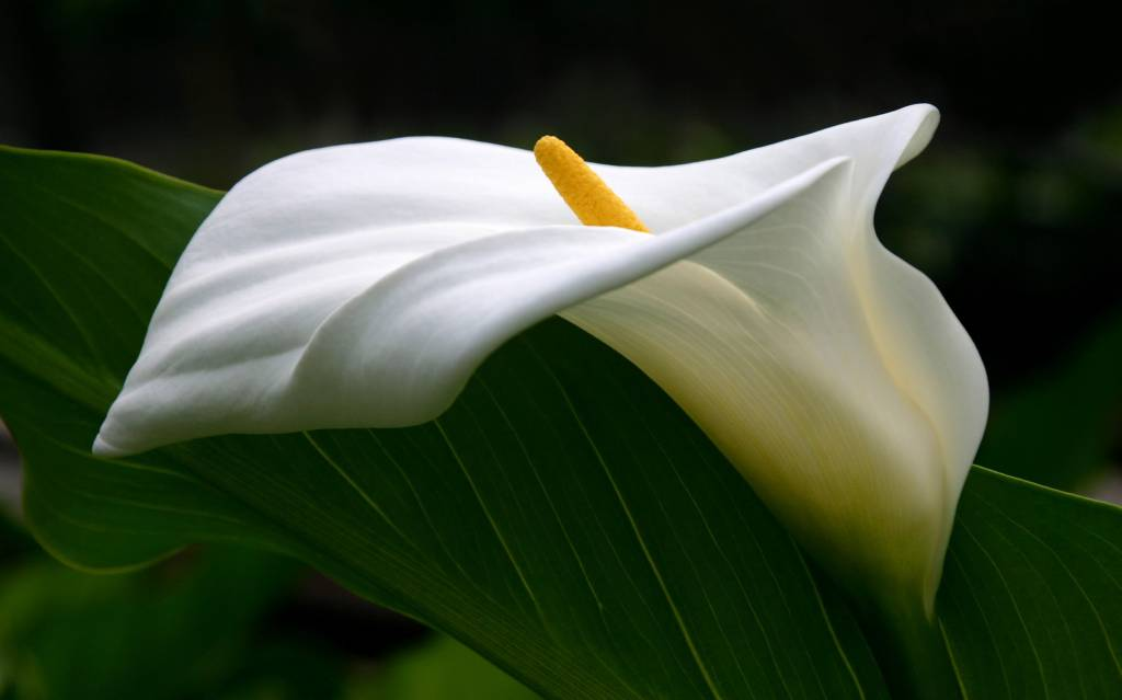 Самые красивые цветы в мире — 72f4b5c579050d93.jpg