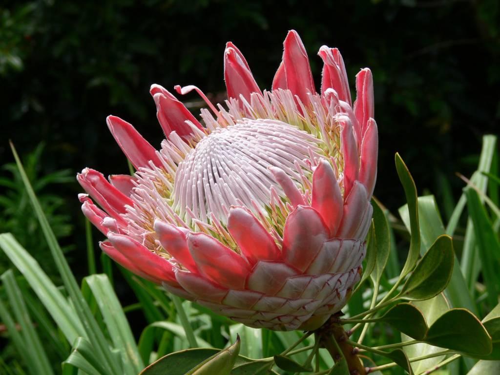 самые красивые цветочки
