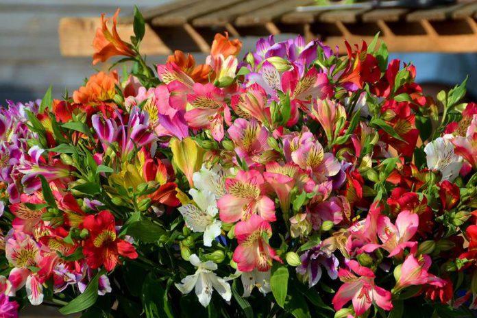 Самые красивые цветы в мире — a6e85e700f680be8.png