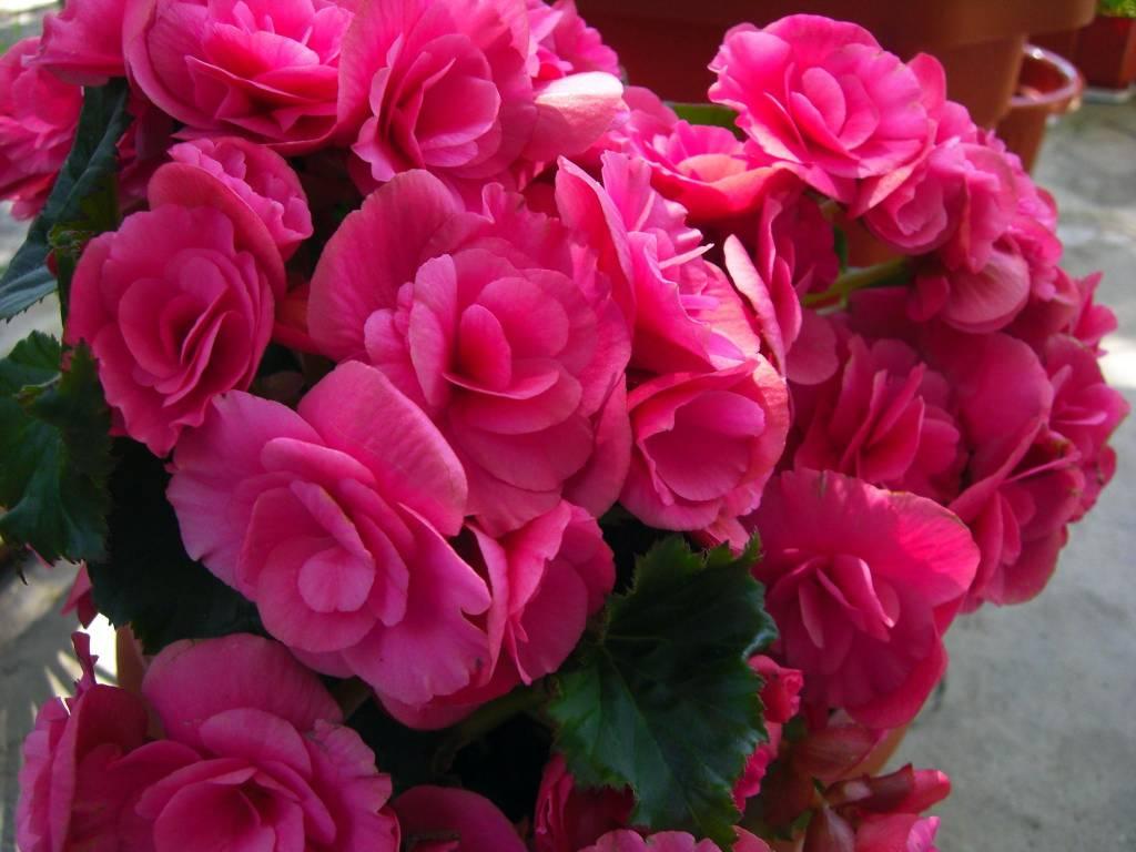 Самые красивые цветы в мире — a8ebc8f68884452e.jpg