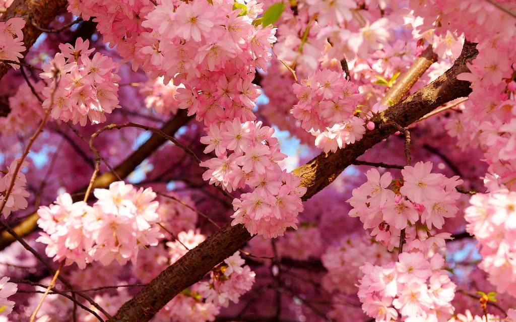 самые красивые цветы мира фото с названиями