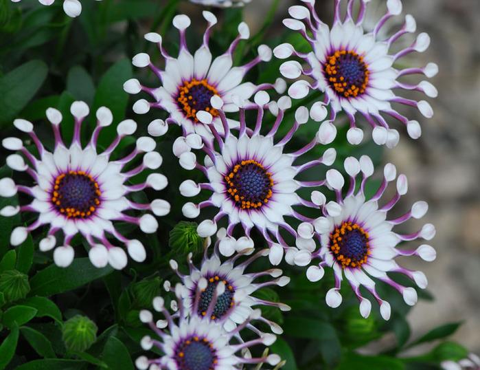 Самые красивые цветы в мире — 709d3fe5066dd5d8.png
