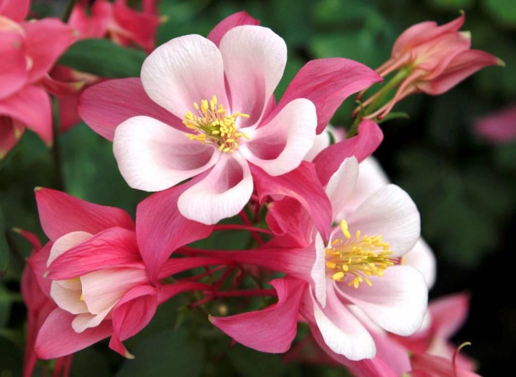 Самые красивые цветы в мире — 3a96a34e560e9086.jpg