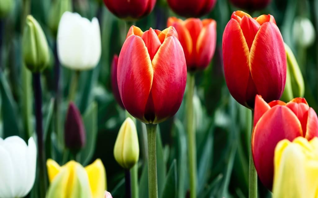 самые красивые цветы фото и названия