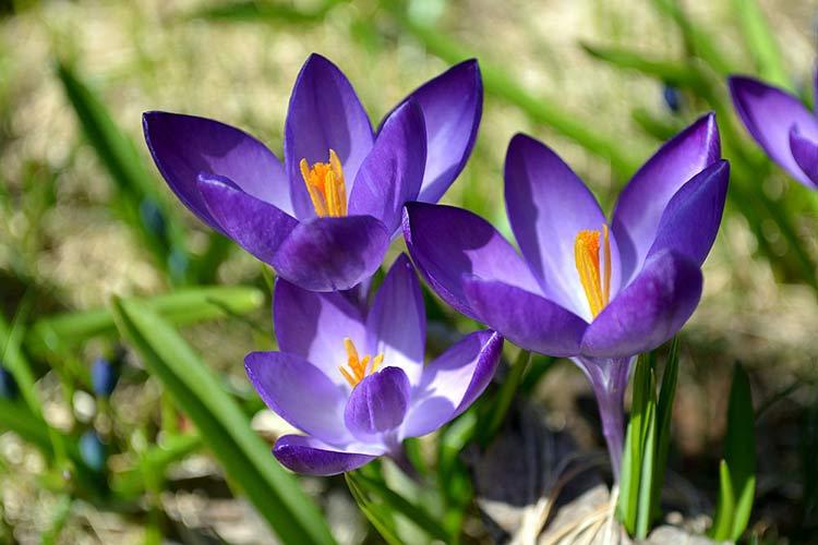 Самые красивые цветы в мире — 1304adeb978562f3.png