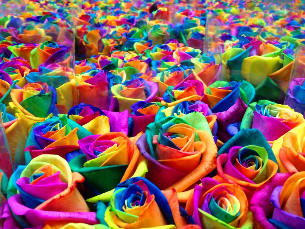 самый красивый цветок на земле фото