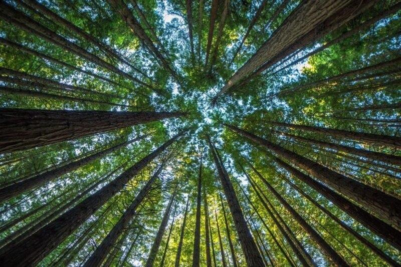 Что будет с миром, если природные ресурсы иссякнут?