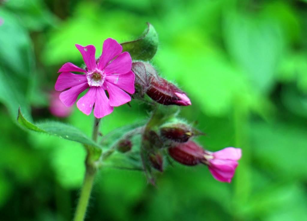 Самые красивые цветы в мире — 8822941771fc3ee.jpg