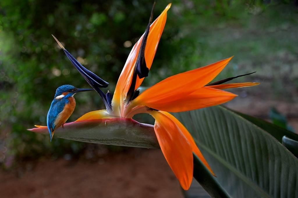 фотографии самых красивых цветов в мире