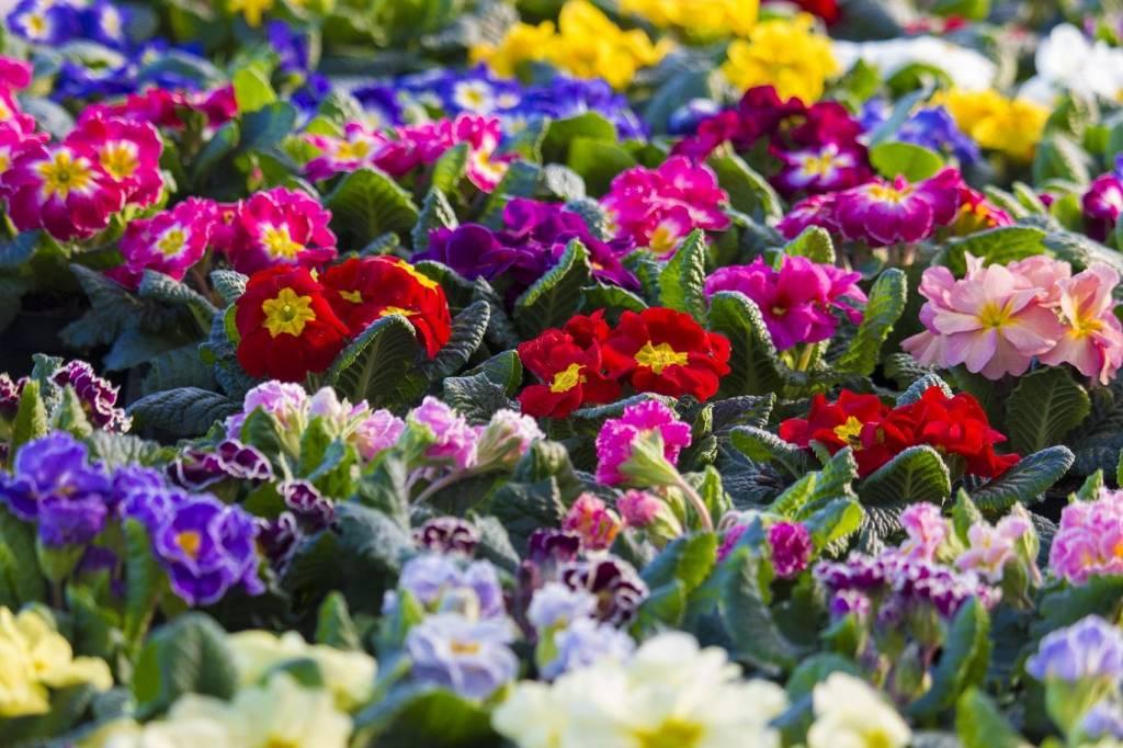какой цветок самый красивый в мире