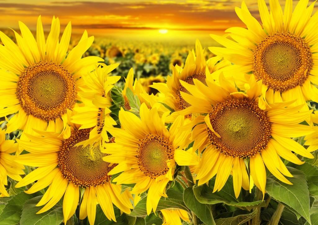 какие самые красивые цветы