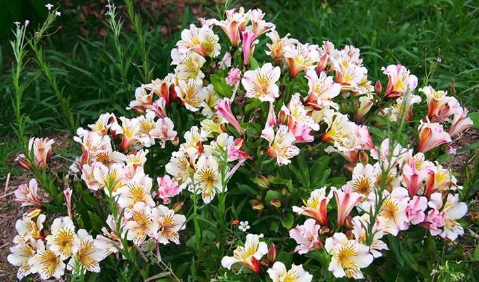 фотки самых красивых цветов в мире