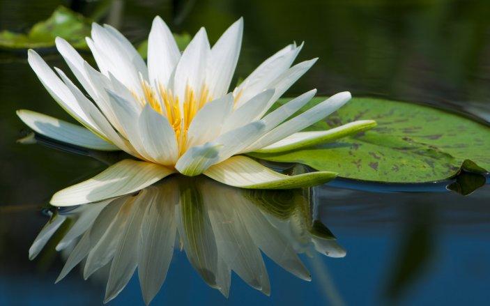 Самые красивые цветы в мире — 586ff1f12491d4ee.png