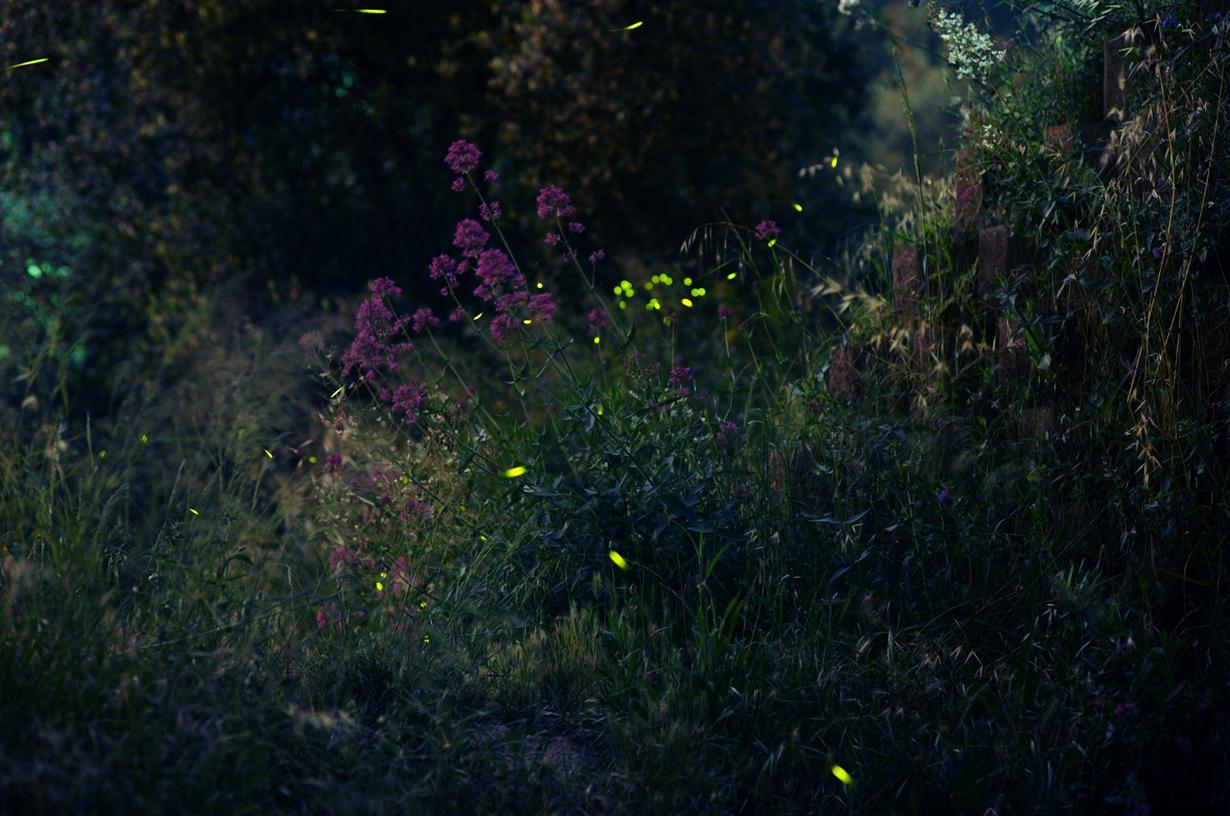 Светляки. (Marion Schreiber)
