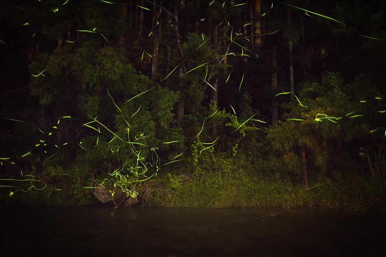 Светляки. (kobaken++)