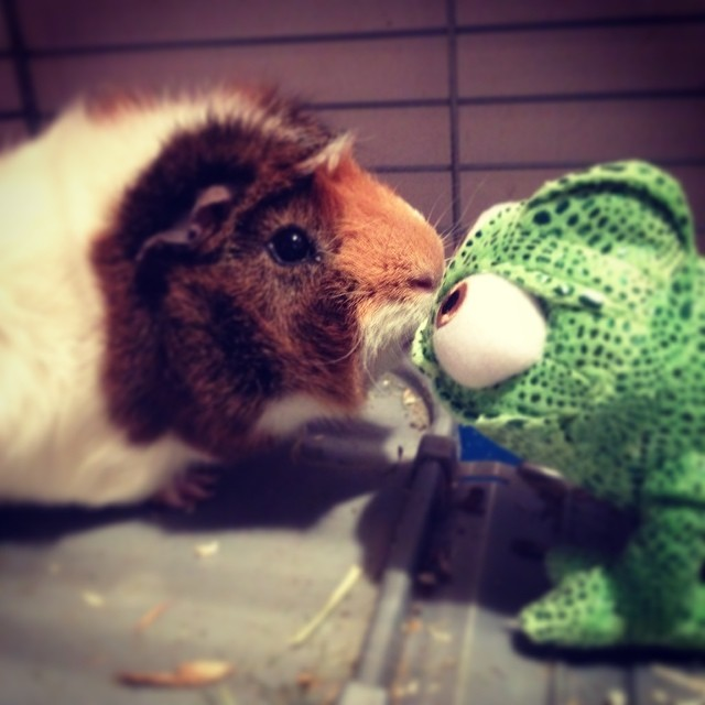Милые и симпатичные, позитивные животные.