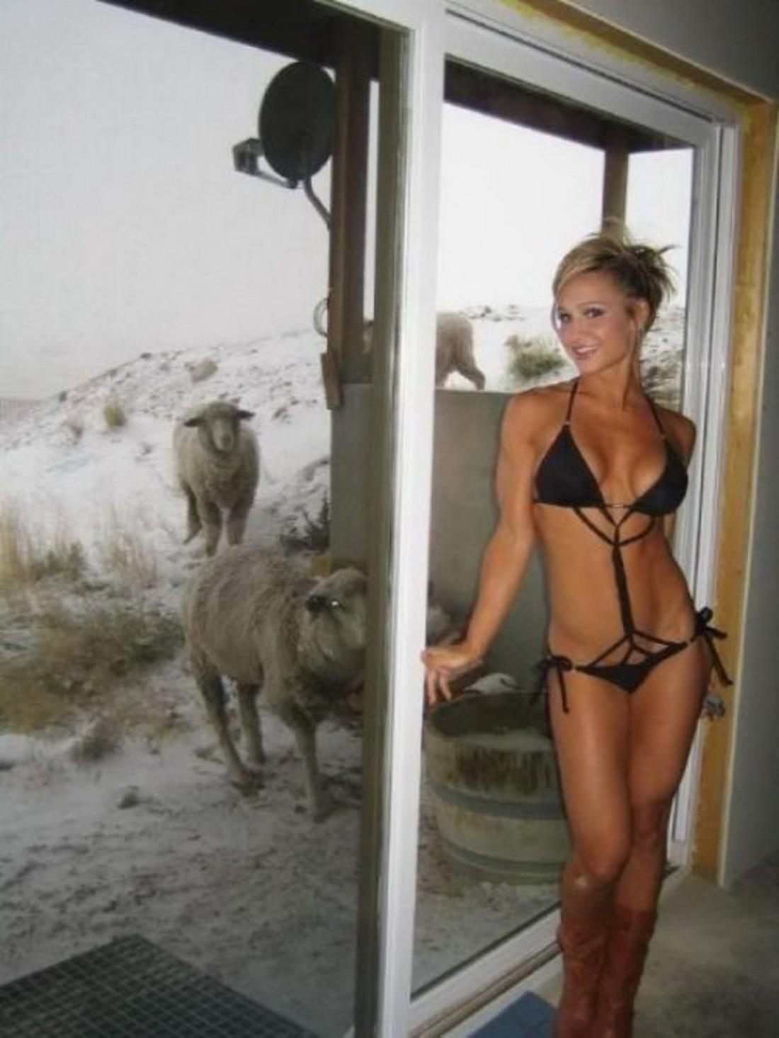 Секс с овцами и баранами порно фото