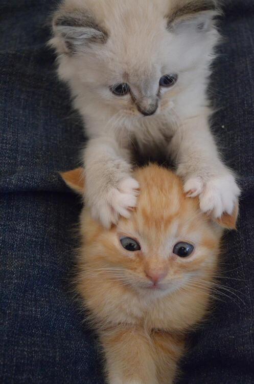 Милые и позитивные животные.