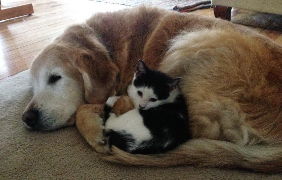 Забавные и милые животные.