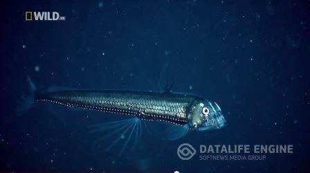 Морские монстры и чудовища глубин океанов