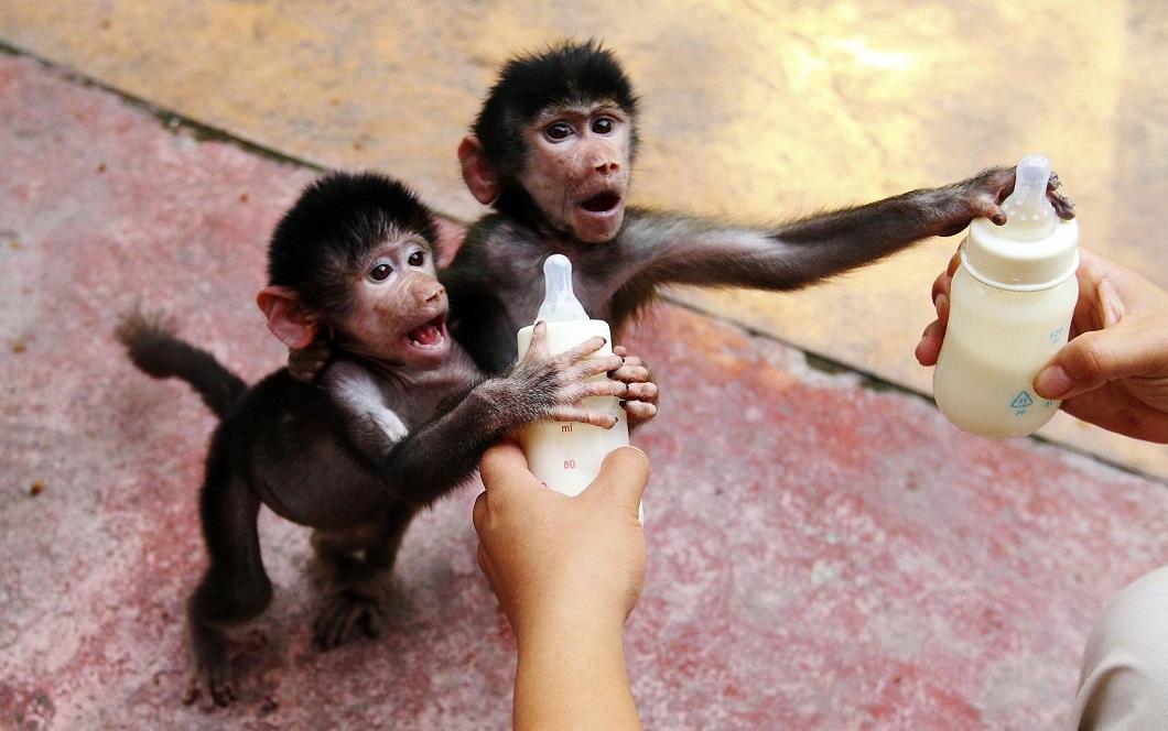 luchshie foto zhivotnyx nedeli v sentyabre 1 Лучшие фотографии животных со всего мира за неделю