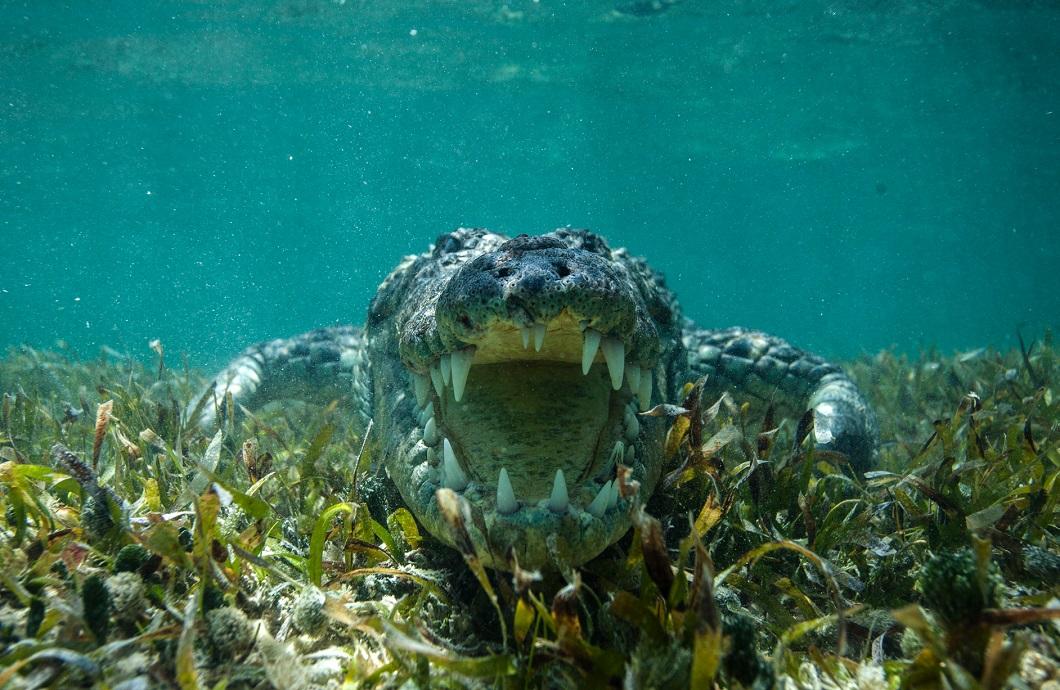 luchshie foto zhivotnyx nedeli v sentyabre 11 Лучшие фотографии животных со всего мира за неделю