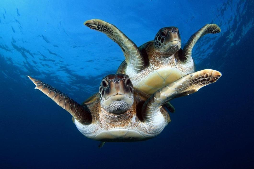 luchshie foto zhivotnyx nedeli v sentyabre 13 Лучшие фотографии животных со всего мира за неделю