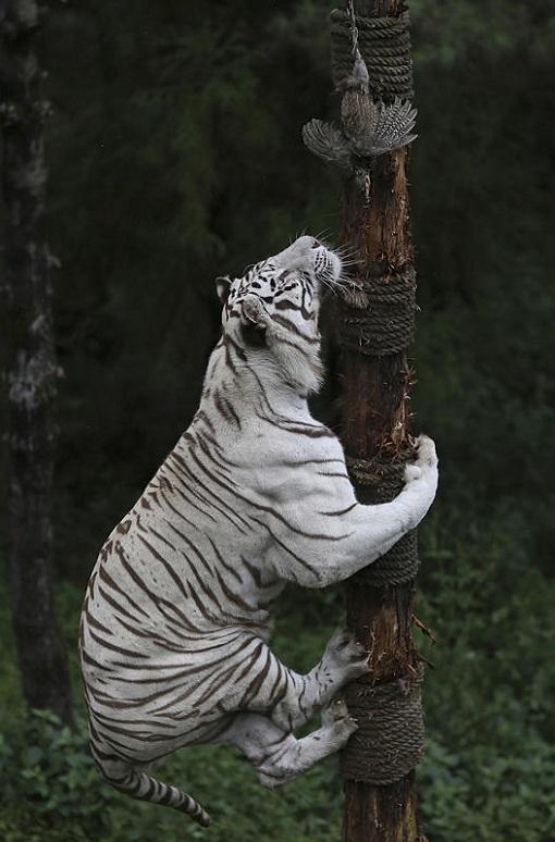 luchshie foto zhivotnyx nedeli v sentyabre 3 Лучшие фотографии животных со всего мира за неделю