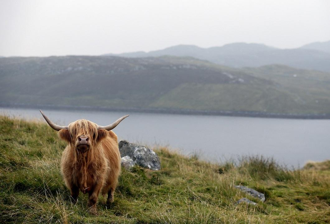 luchshie foto zhivotnyx nedeli v sentyabre 7 Лучшие фотографии животных со всего мира за неделю