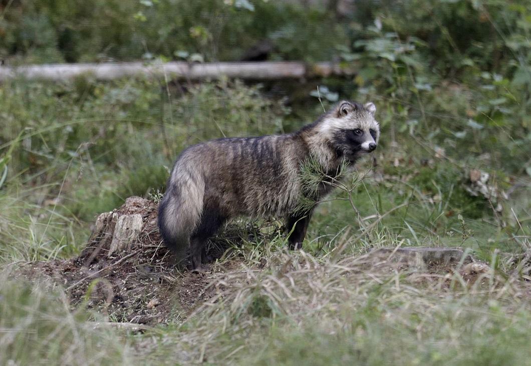 luchshie foto zhivotnyx nedeli v sentyabre 8 Лучшие фотографии животных со всего мира за неделю