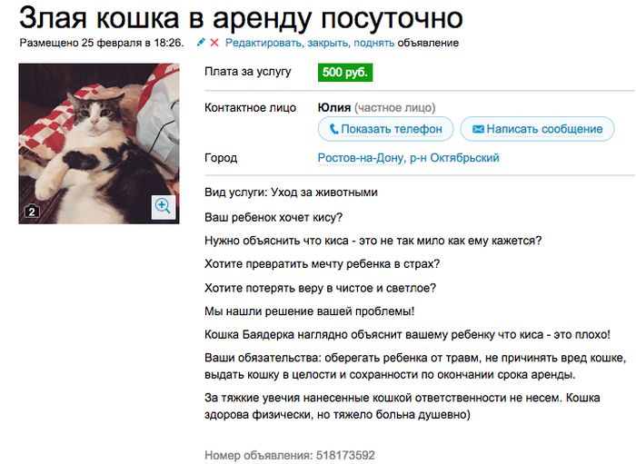 Аренда злой кошки, которая отобьет желание заводить домашнее животное (7 скриншотов)