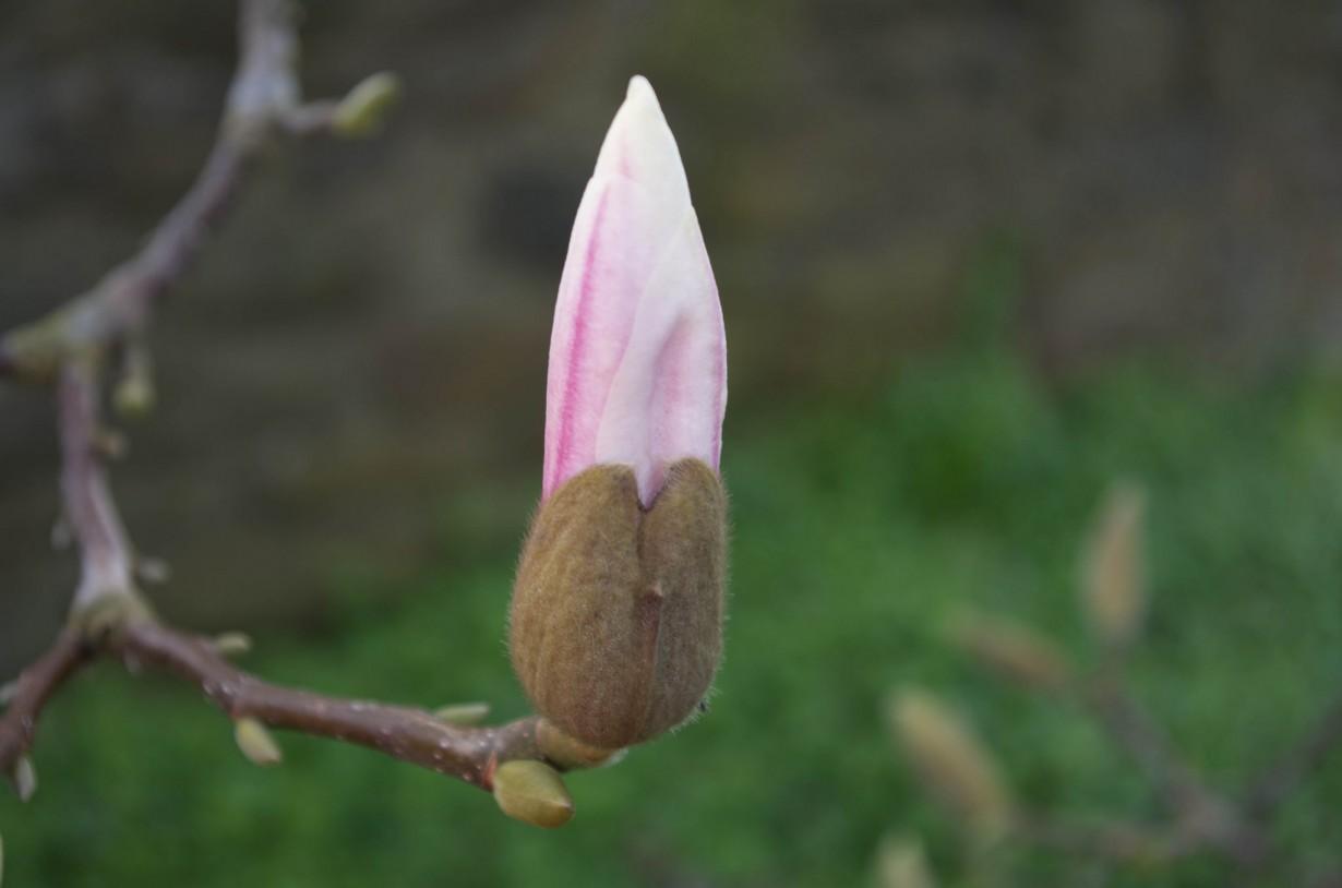 Наступление весны (DaveBleasdale)