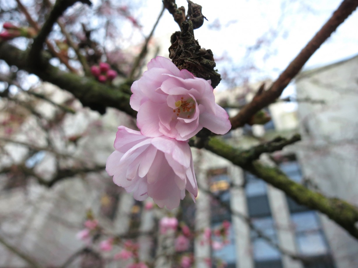 Наступление весны (Ruth Hartnup)