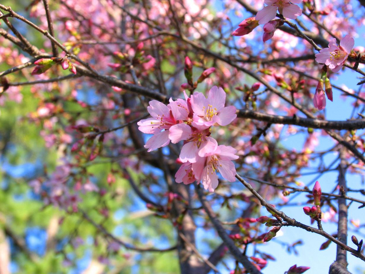 Наступление весны (karol m)
