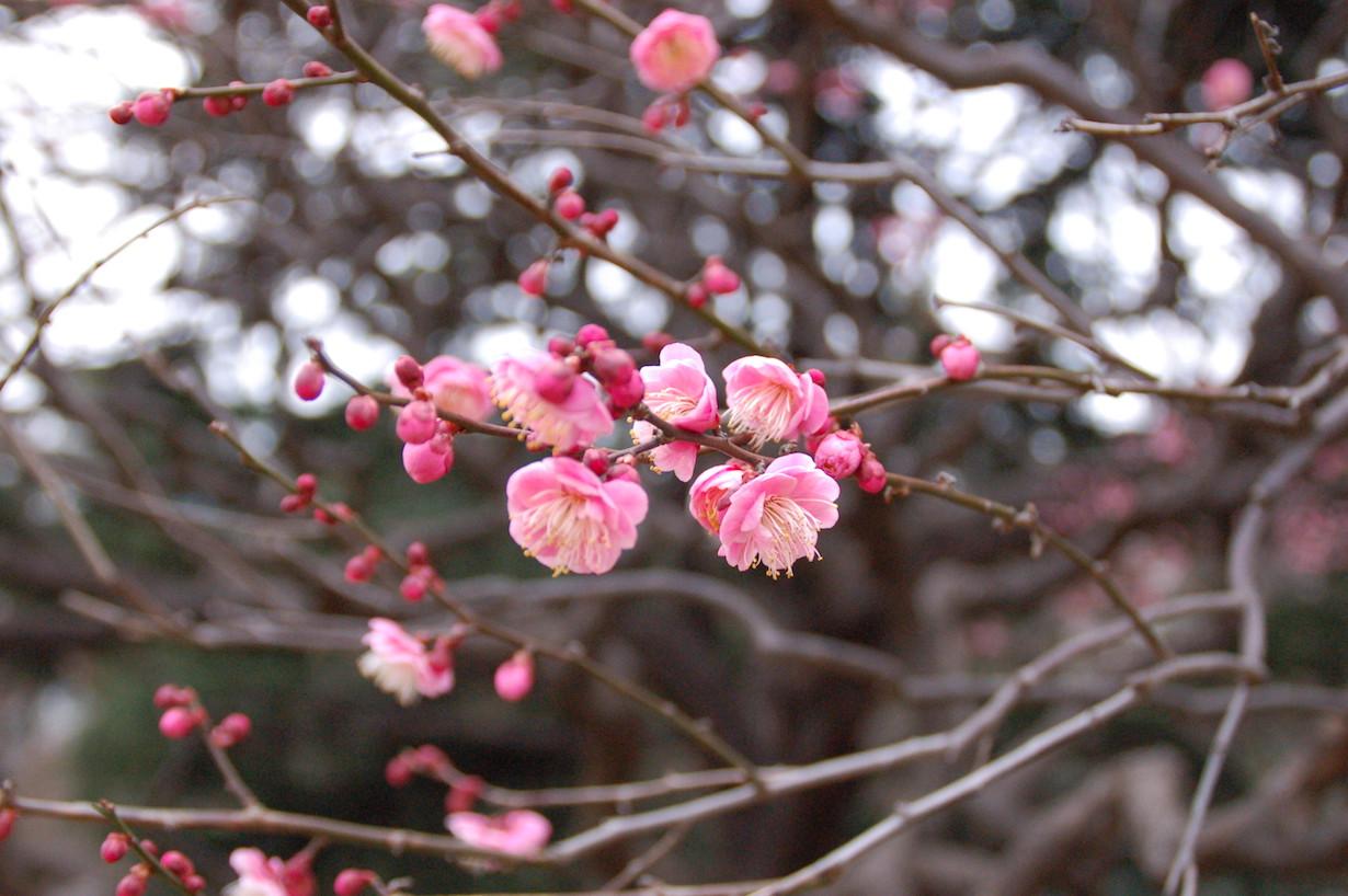 Наступление весны (Marufish)