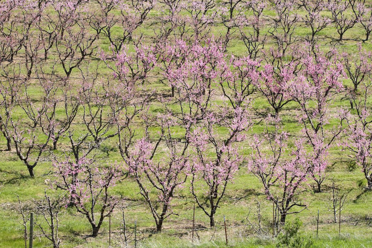 Наступление весны (Mitch Lorens)