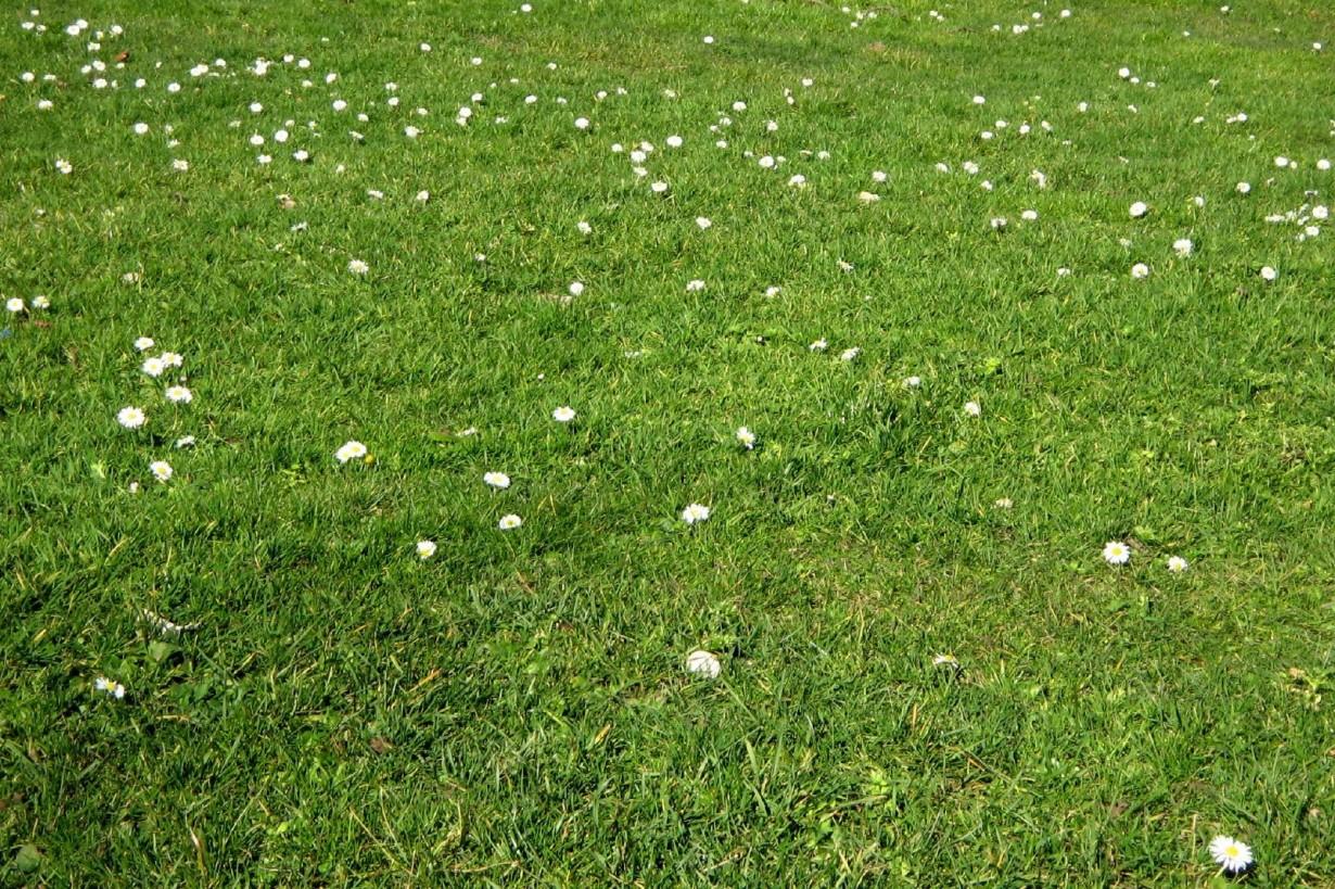 Наступление весны (Till Westermayer)