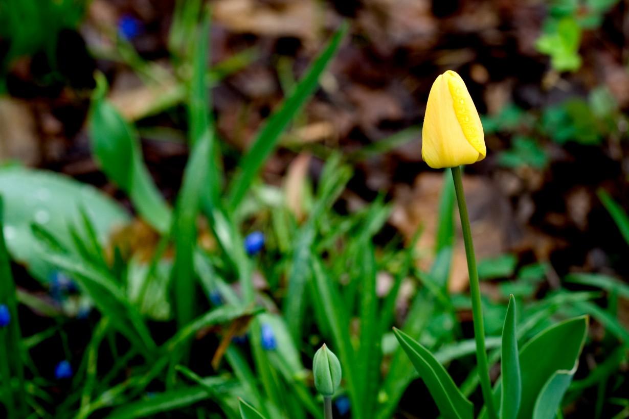 Наступление весны (Nic McPhee)
