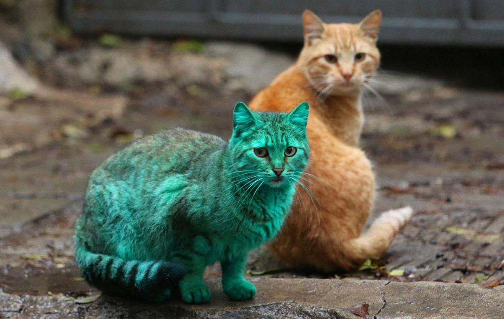 Почти настоящий зелёный кот