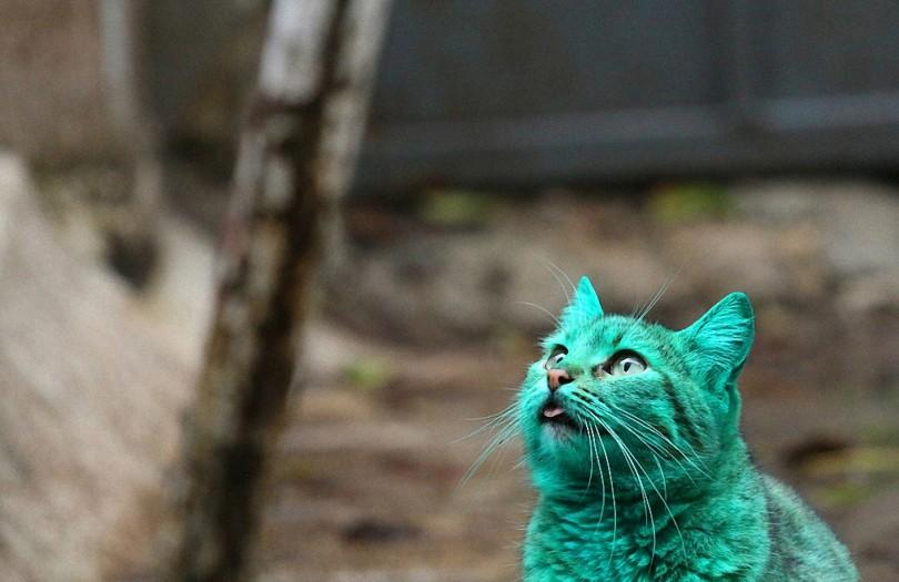 Зеленый кот из Варны-4-1