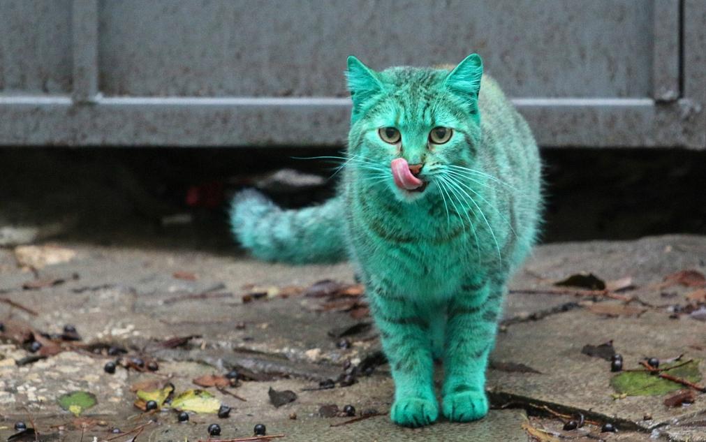 Почти настоящий зелёный кот.