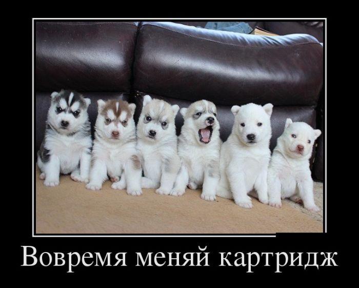 Большая коллекция, смешных, весёлых и умных демотиваторов..