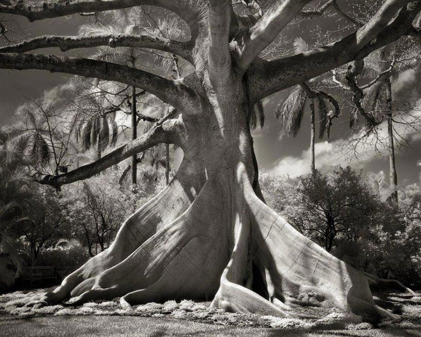 14 лет поисков самых древних деревьев-10