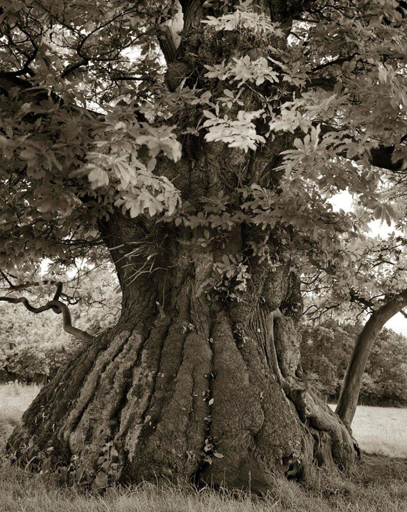 14 лет поисков самых древних деревьев-12