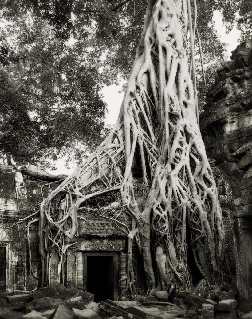 14 лет поисков самых древних деревьев-13